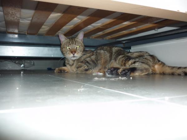 Les mamies et papis chats à l'adoption :) Image.php?dossier=uploads&image=tom_copy