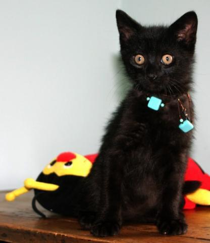 husker chat noir