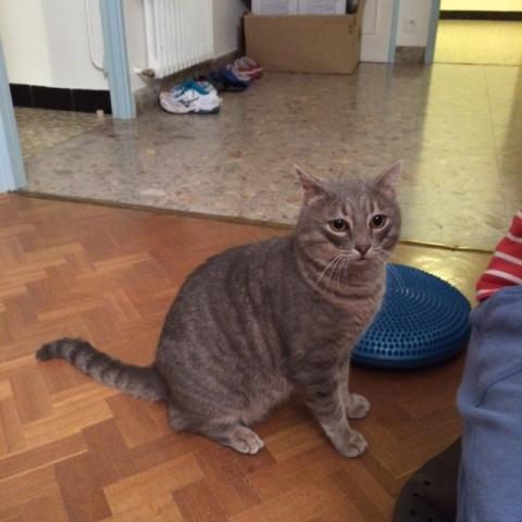 Nos positifs !! 45 amours de chats à adopter - Page 3 Image.php?dossier=uploads&image=vagabond
