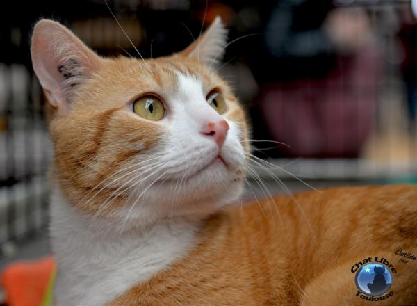 Nos positifs !! 45 amours de chats à adopter - Page 3 Image.php?dossier=uploads&image=vinci2_light