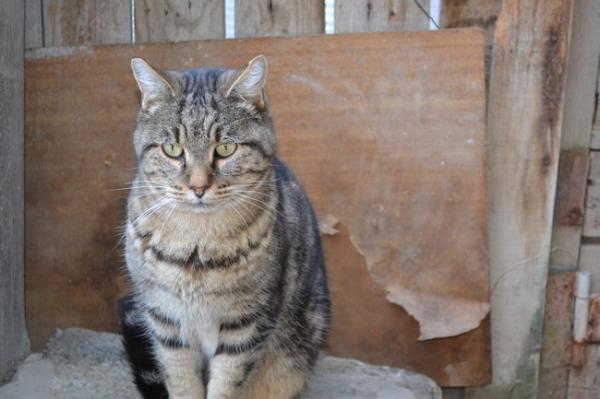 Les mamies et papis chats à l'adoption :) Image.php?dossier=uploads&image=vivaldi2211