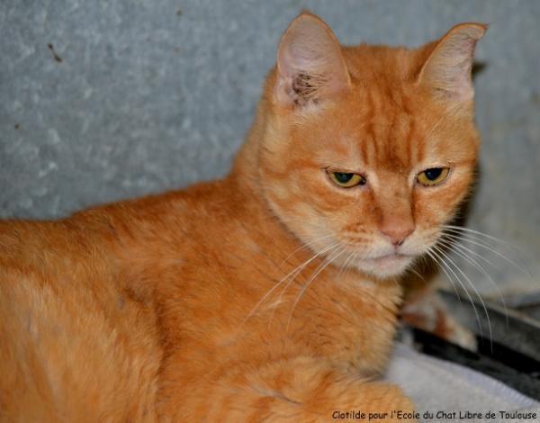 Les mamies et papis chats à l'adoption :) - Page 2 Image.php?dossier=uploads&image=zazou_light