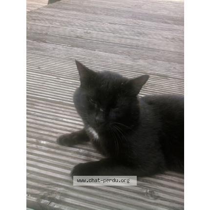 Nos positifs !! 45 amours de chats à adopter - Page 3 Chat_pelleport