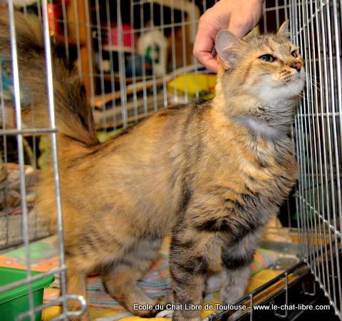 Les mamies et papis chats à l'adoption :) - Page 2 Jadia10