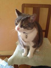Les mamies et papis chats à l'adoption :) Moumoune_copy