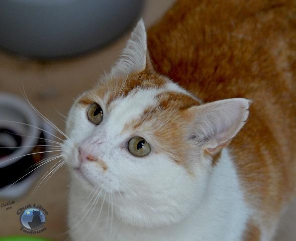 Les chats à adopter qui s'entendent avec les chiens - Page 2 Rouky5_light