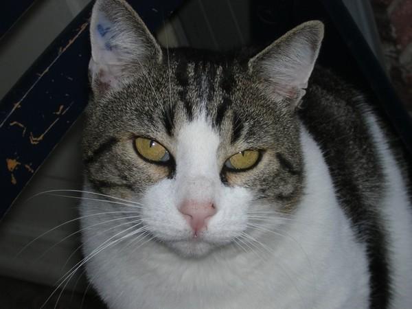 tous les chats fiv+ de l'école du chat libre de toulouse(31)